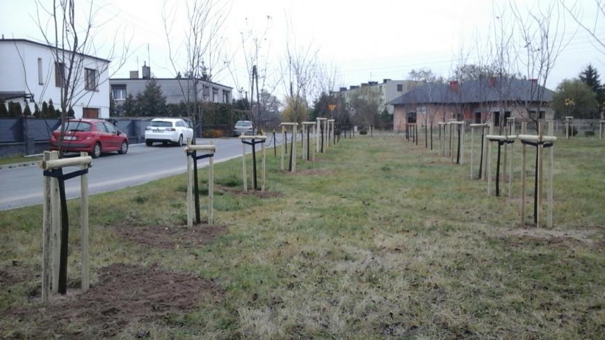 Nasadzenia nowych drzew w mieście i gminie Nekla