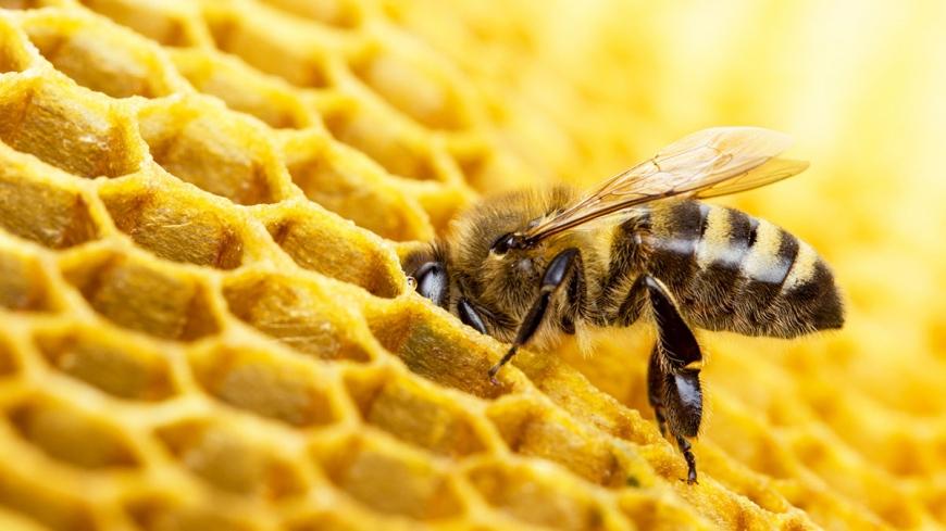 Pszczołom na ratunek!